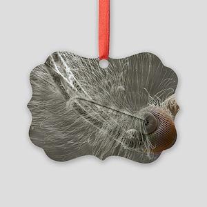 Male mosquito head, SEM - Picture Ornament
