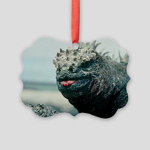 Marine iguana - Picture Ornament