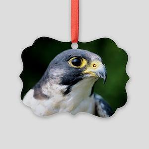 Peregrine falcon - Picture Ornament