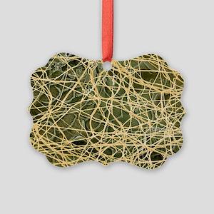 Spider's web, SEM - Picture Ornament