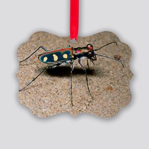 Tiger beetle - Picture Ornament