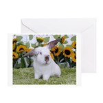 Presto with Sunflowers 2-Greeting Card