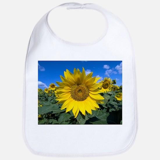 Sunflowers - Bib