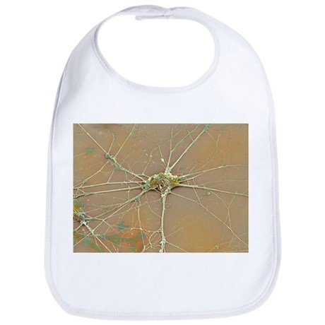 Nerve cell, SEM - Bib