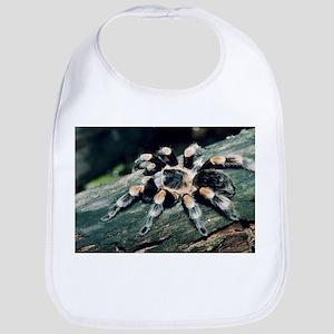 Mexican redknee tarantula - Bib