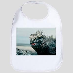 Marine iguana - Bib