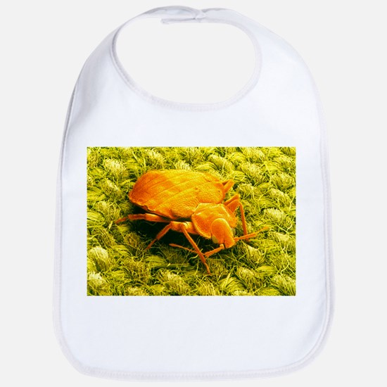SEM of a bed bug - Bib