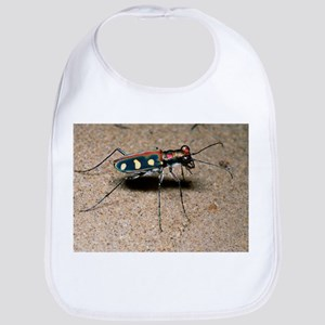 Tiger beetle - Bib