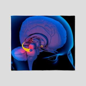 Hippocampus in the brain, artwork - Stadium Blank