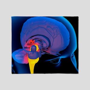 Medulla oblongata in the brain, artwork - Stadium