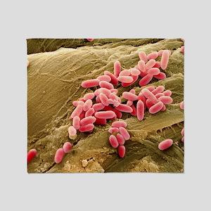 Pseudomonas aeruginosa bacteria, SEM - Stadium Bl
