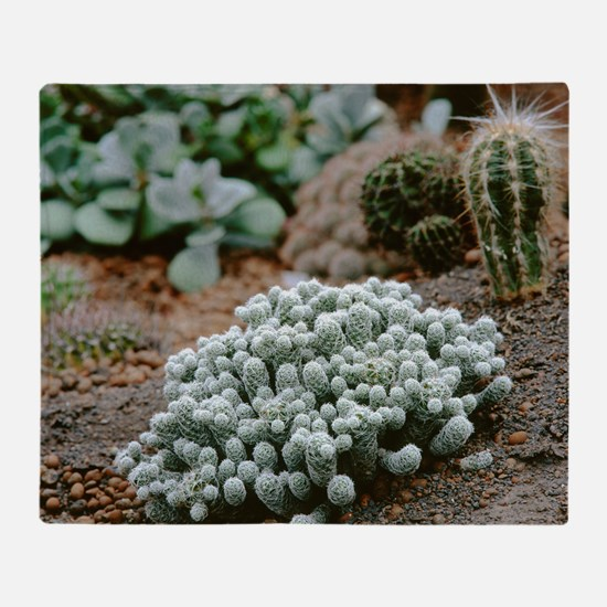 Cacti garden - Throw Blanket