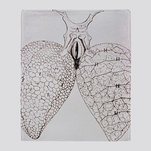 Illustration from Malpighi's book On the Lungs -