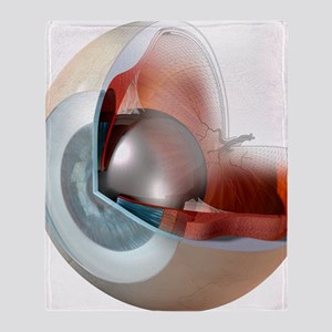 Eye anatomy, artwork - Throw Blanket