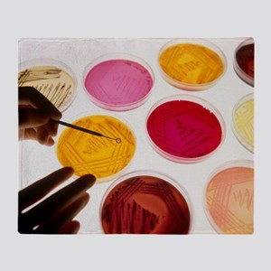 Petri dish bacterial cultures, picking a colony -