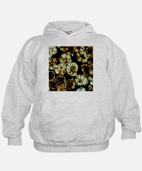 LM of assorted fossil Foraminifera shells - Hoodie