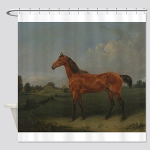 A Bay Horse Shower Curtain