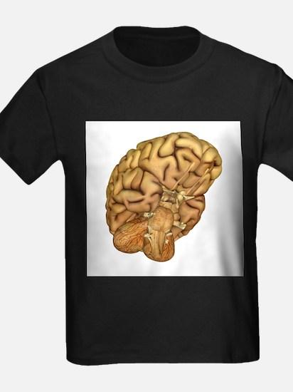 Brain anatomy - Kid's Dark T-Shirt