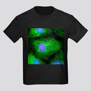 Cell division, fluorescent micrograph - Kid's Dark