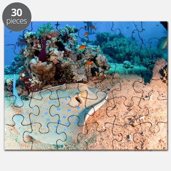 Blue-spotted stingray - Puzzle