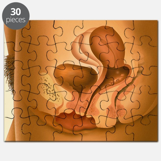 Female sexual arousal - Puzzle