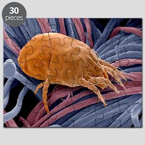 Dust mite, SEM - Puzzle