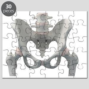 Pelvis bones, artwork - Puzzle