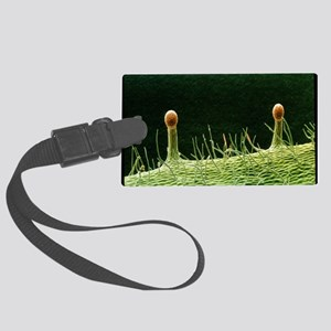 Hairs on sepal in rose flower - Large Luggage Tag