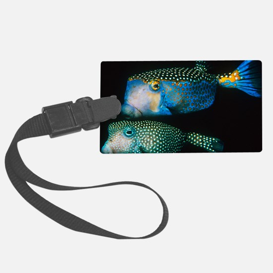 Whitespotted boxfish - Luggage Tag