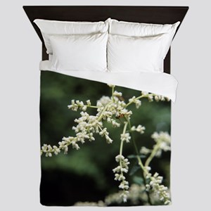 Artemisia flowers - Queen Duvet