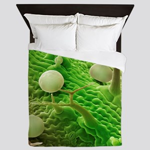 French lavender leaf surface, SEM - Queen Duvet