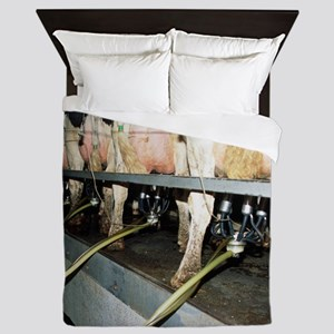 Milking dairy cows - Queen Duvet