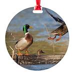 Mallard Flight Round Ornament