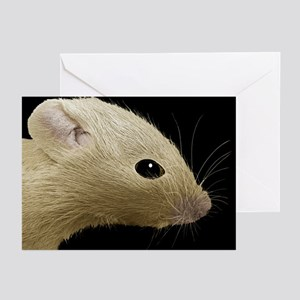 House mouse, SEM - Greeting Cards (Pk of 20)