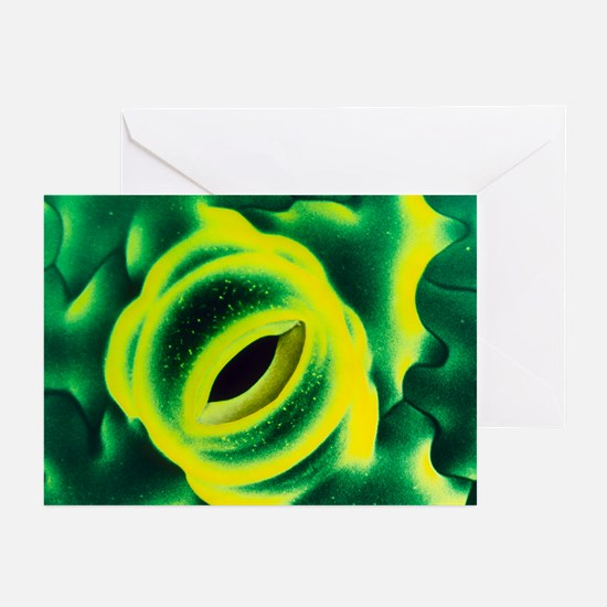 Open stoma on tobacco leaf - Greeting Cards (Pk of