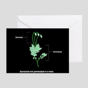 Moss anatomy, artwork - Greeting Cards (Pk of 20)