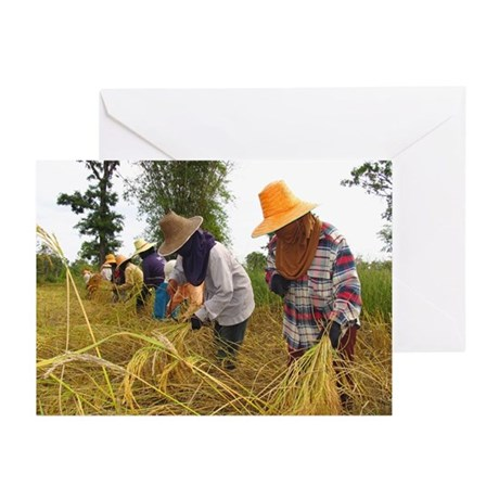 Rice harvest - Greeting Cards (Pk of 20)