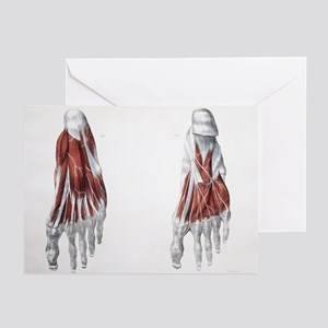 Foot nerves - Greeting Cards (Pk of 20)
