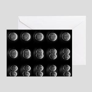 Mitosis - Greeting Cards (Pk of 20)
