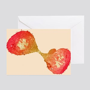Mitotic cell division, TEM - Greeting Cards (Pk of