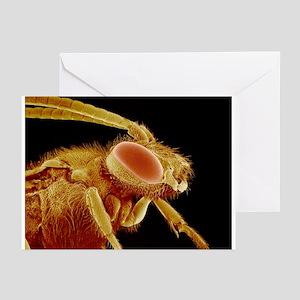 Bee, SEM - Greeting Cards (Pk of 20)