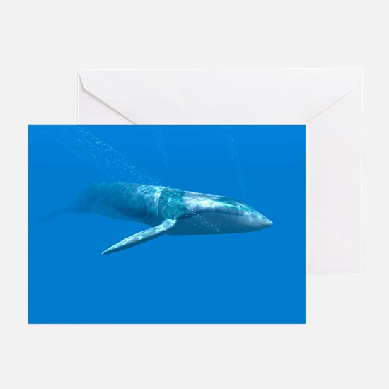 Blue whale - Greeting Cards (Pk of 20)