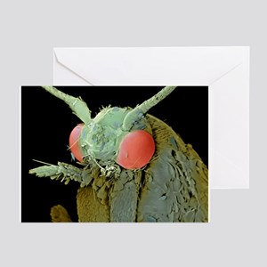 Common clothes moth, SEM - Greeting Cards (Pk of 2
