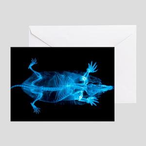 European mole, X-ray - Greeting Cards (Pk of 20)