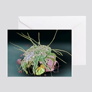 Dust mite, SEM - Greeting Cards (Pk of 20)