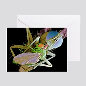 Fly eating another fly, SEM - Greeting Cards (Pk o