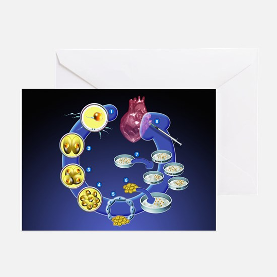 Stem cell research - Greeting Cards (Pk of 20)