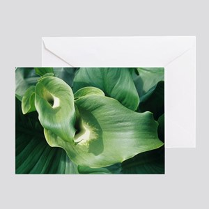 Common arum lily leaves - Greeting Card