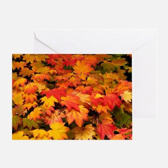 Maple (Acer japonicum vitifolia) leaves - Greeting
