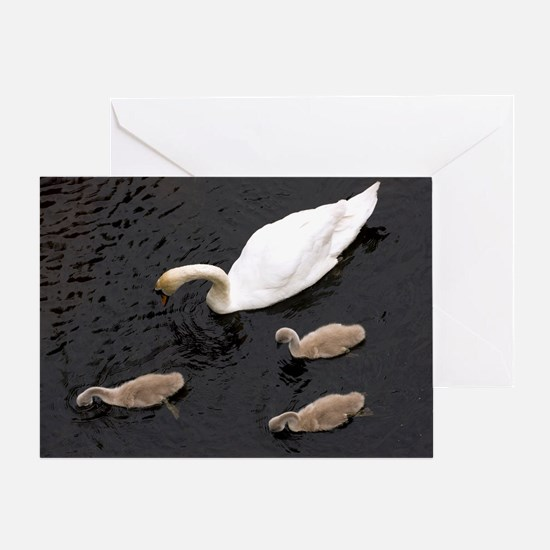 Mute swan and cygnets - Greeting Card